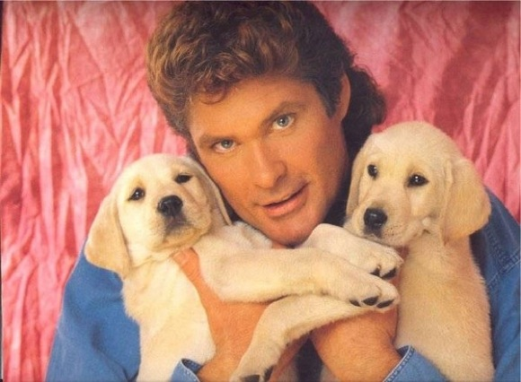 international hoff hasslehoff day
